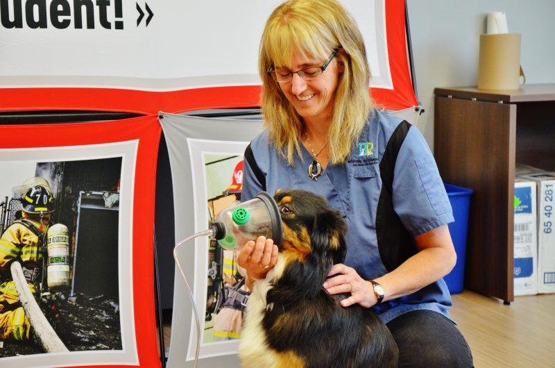 Les pompiers du Service sécurité incendie de la Ville de Sorel-Tracy pourront désormais utiliser des masques à oxygène pour sauver les animaux incommodés par la fumée lors d'un incendie. Sur la photo, la vétérinaire Marie- Claude-Lavallée et son chien Phoebe. | Photo: TC Média - Julie Lambert