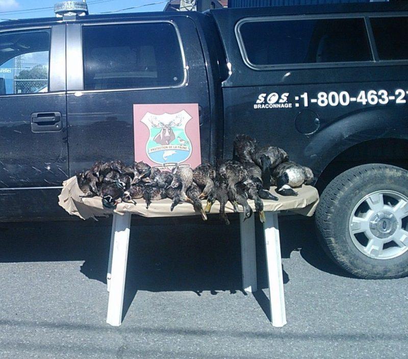 Plusieurs oiseaux ont été saisis lors de l'opération. | Gracieuseté