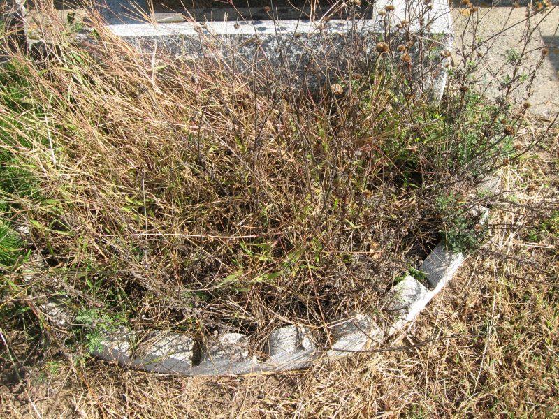 Ce qui était autrefois un espace réservé à des plantations est souvent laissé à l'abandon après quelques années. | TC Média - Archives