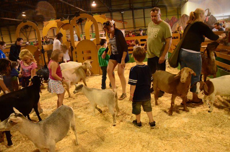 L'Expo Agricole de Sorel-Tracy a lancé le coup d'envoi hier. Les festivités se continuent aujourd'hui sur le terrain adjacent au Colisée Cardin. | TC Média - Archives