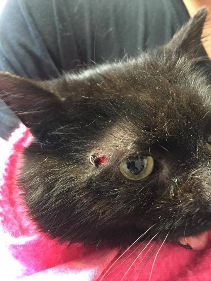 Misery a été blessée par une balle de plomb. | Photo: Gracieuseté
