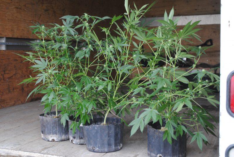 Plusieurs policiers ont participé à l'enquête pour saisir des plants de cannabis à Saint-Aimé. | Photo: TC Média – Stéphanie MacFarlane