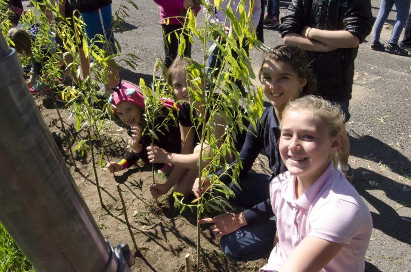 Les élèves de l'école primaire de Sainte-Victoire-de-Sorel découvrent comment planter, entretenir et tisser le saule. | Photo: Stéphane Martin