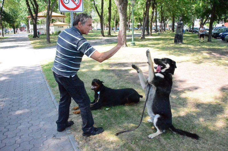 André Périgny, entraîneur expérimenté de chiens, ne croit pas que bannir les pitbulls est une solution. | Photo: TC Média – Julie Lambert