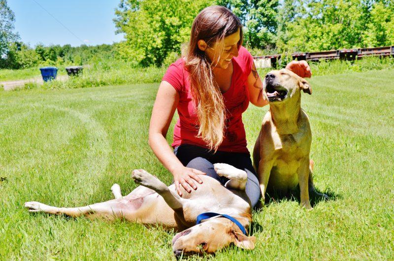 Megan Richer craint la vague de peur qui entoure les pitbulls depuis quelques semaines.   Photo: TC Média – Julie Lambert