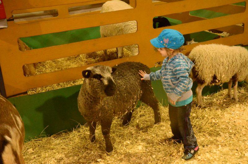 Une foule d'activités seront organisées lors de la 167e édition de l'Expo agricole de Sorel-Tracy. | TC Média - Sarah-Eve Charland