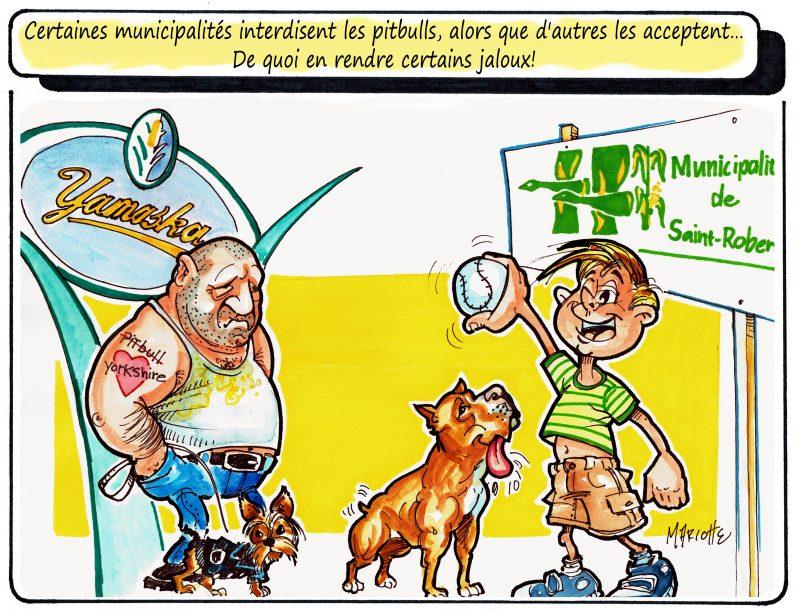 Le débat entourant les pitbulls fait «rage», même dans la région! | Gilles Bill Marcotte