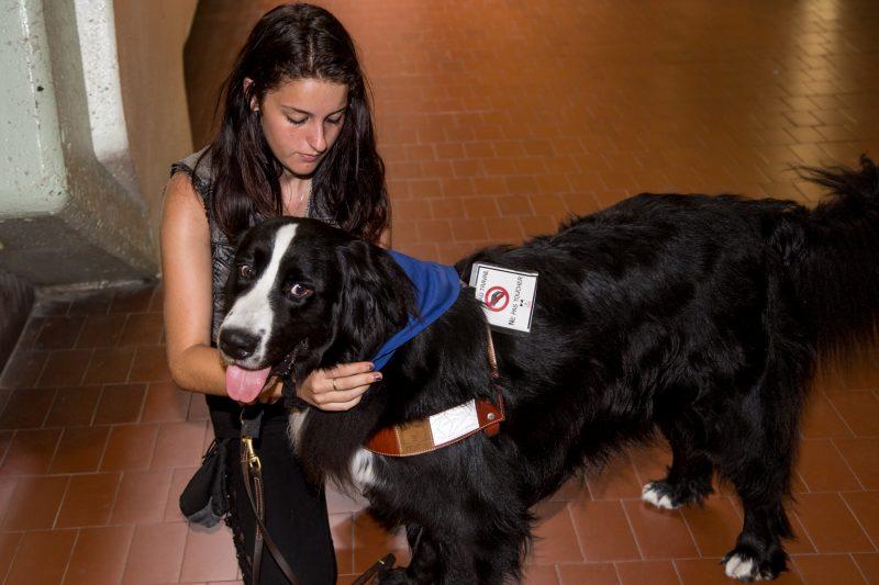 La chien MIRA Agua aide Sarah Ayotte à gérer son anxiété généralisée. | TC Média - Archives/Pascal Cournoyer
