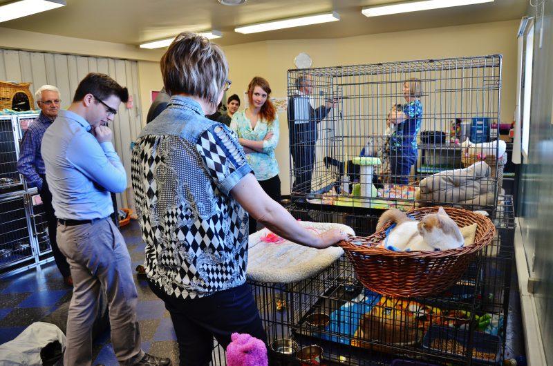 Le Centre animalier Pierre-De Saurel est dans une phase d'expansion depuis son ouverture il y a à peine un an. | Photos: TC Média - Julie Lambert