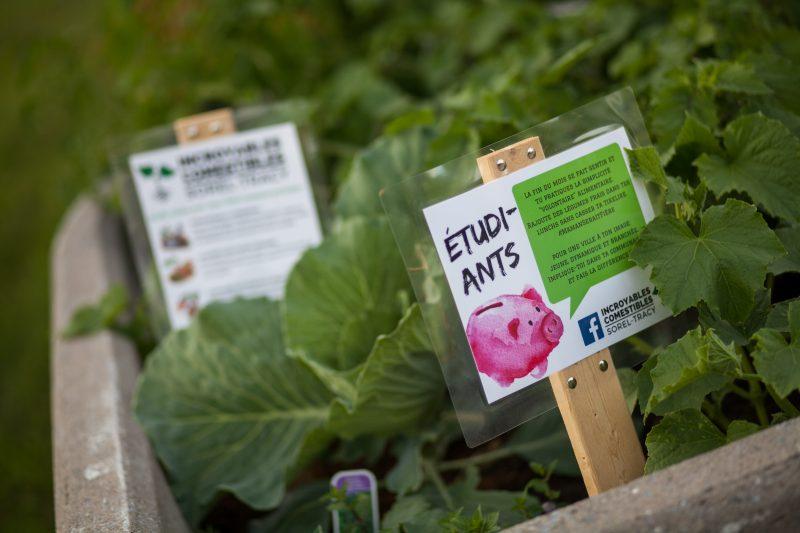 Les incroyables Comestibles ont fait leur arrivée à Sorel-Tracy le mois dernier. | Valérie-Anne Fontaine, © Valérie-Anne Fontaine