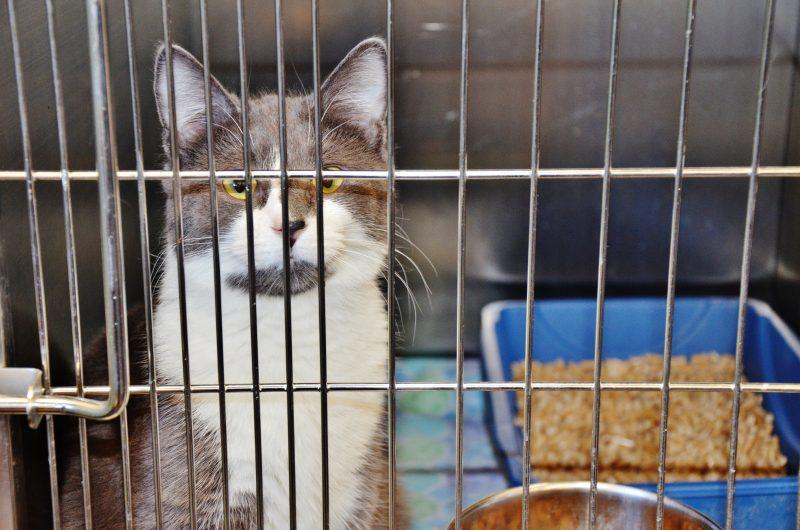 Le nombre de plaintes du public jugées non fondées sont nombreuses dans les animaleries de la région. | Photo: TC Média – Julie Lambert