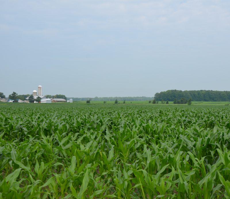 Le prix des terres a augmenté drastiquement au cours des dernières années. | Photo: TC Média - Archives
