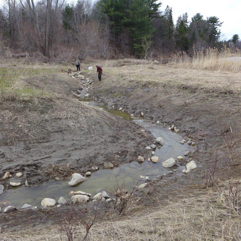 Le réaménagement d'un cours d'eau à Odanak pour faciliter l'accès à une frayère pour les perchaudes a porté fruit. | Gracieuseté