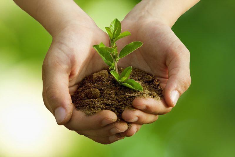 Près de 500 arbres ont été distribués gratuitement. | Depositphotos.com