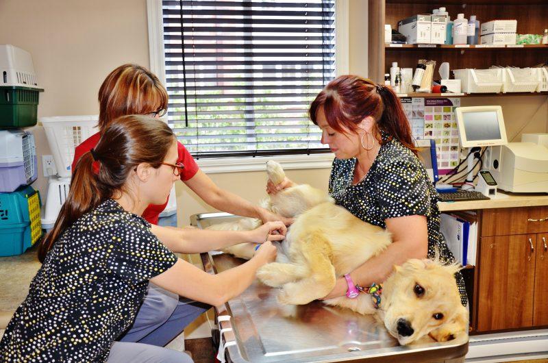 Malgré une facture qui peut être élevée pour des soins de santé, les propriétaires sont prêts à s'endetter pour soigner leur animal de compagnie. | TC Média – Julie Lambert