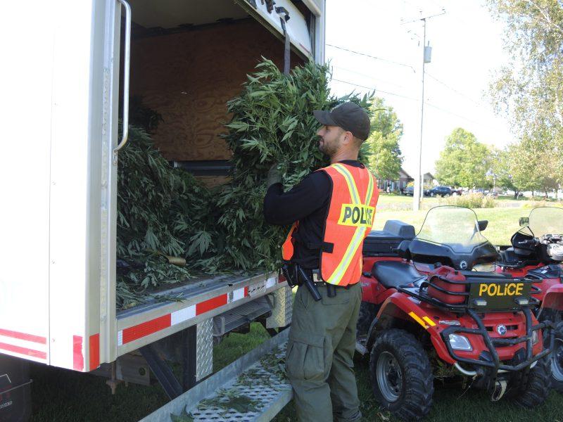 Les enquêteurs de la Sûreté du Québec (SQ) ont saisi plus de 4700 plants de cannabis durant les trois jours de l'opération Cisaille sur le territoire de la MRC Pierre-De Saurel. | TC Média - Sarah-Eve Charland