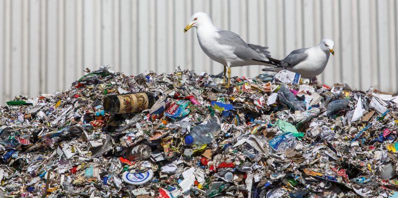 Les citoyens de la région jettent moins de déchets que d'autres régions du Québec. | C 2013 www.photographiesurlevif.ca