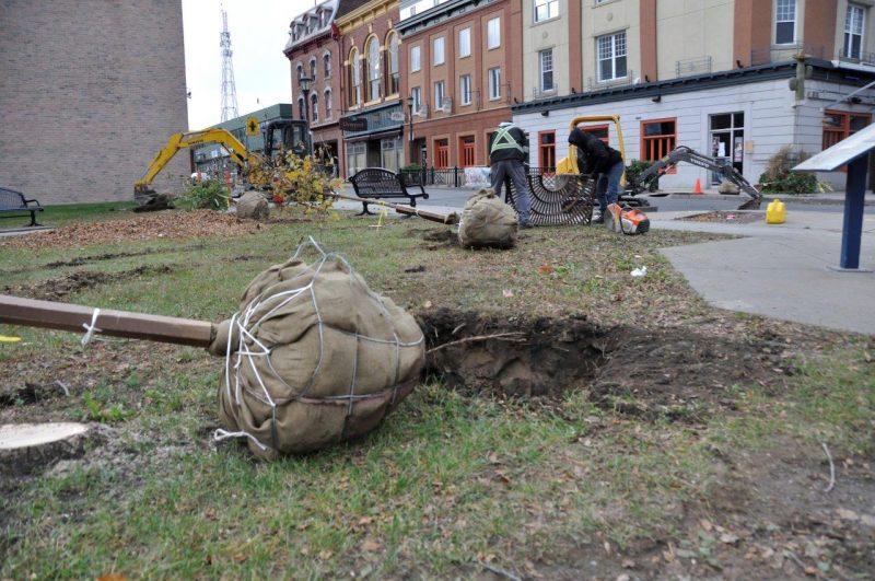 L'agrile de frêne a fait des dommages considérables à Sorel-Tracy. | Ville de Sorel-Tracy