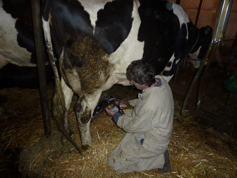 Les producteurs laitiers de la région s'inquiètent de l'entente survenue le 5 octobre sur le Partenariat transpactifique. | Photo TC Média - Archives