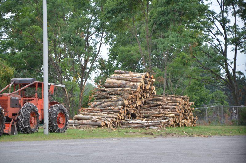 Des arbres ont été coupés sur un terrain appartenant à la Commission scolaire de Sorel-Tracy, près de l'école secondaire Fernand-Lefebvre. (Photo: Xavier Demers)