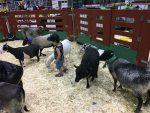 Foule record pour l'Exposition agricole de Sorel-Tracy