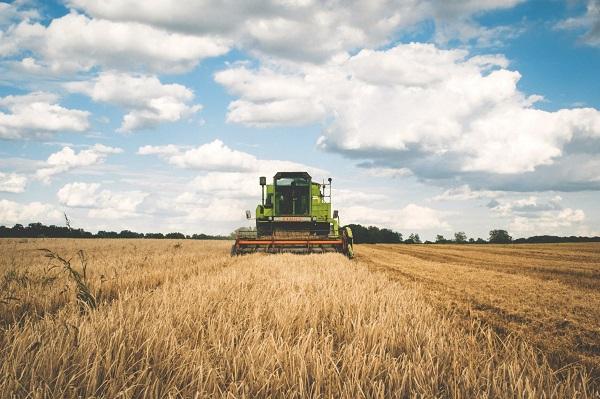 Les producteurs agricoles de grains ne s'en sortent pas si mal jusqu'ici. Photo Freepik
