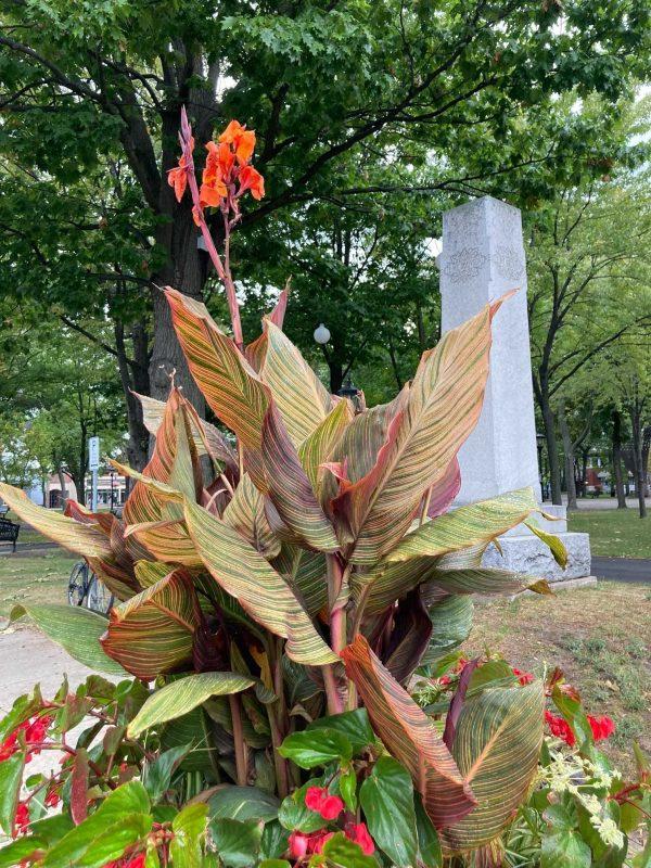 La Ville de Sorel-Tracy lance un concours pour gagner une plante tropicale